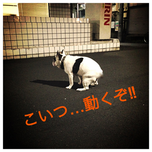 IMG_7246.jpg